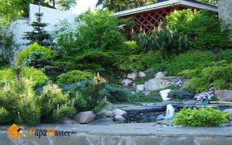 пруд с декоративными растениями