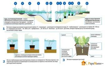 схема - растения для пруда на даче