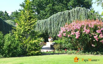 фото хвойных деревьев в благоустройстве дачного участка