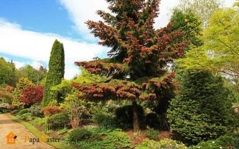 хвойные деревья в благоустройстве дачного участка