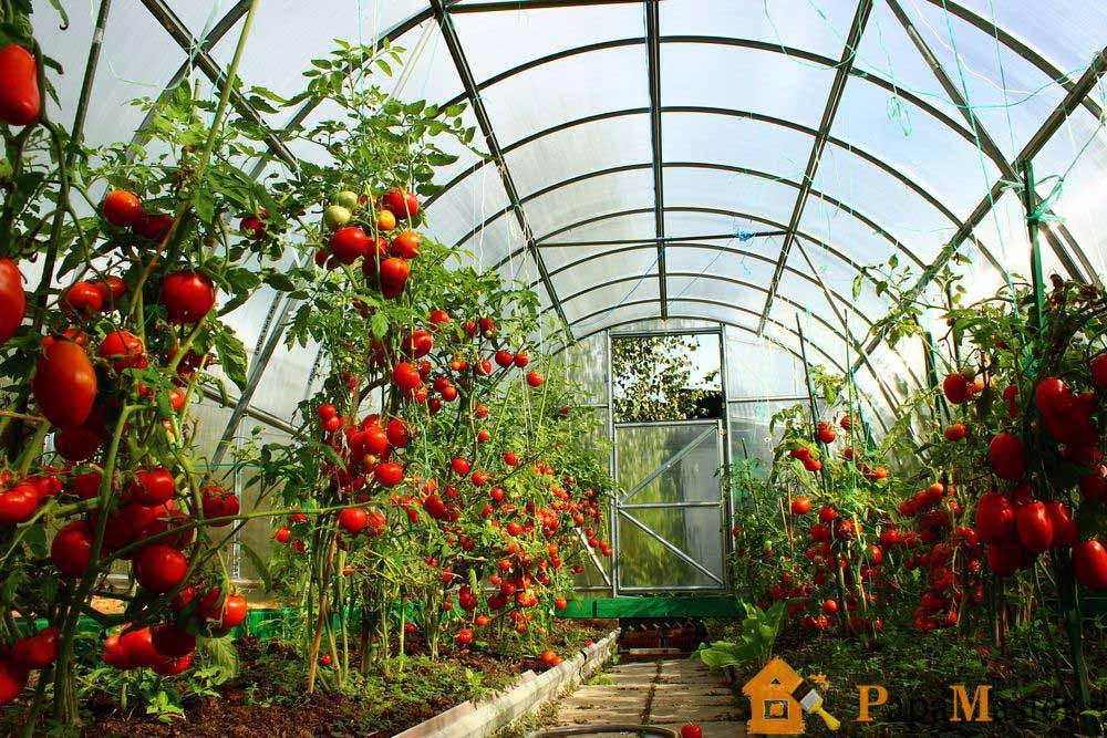 Как сделать парник для растений