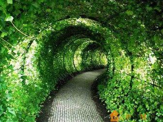 Дизайн частного дома своими руками - зеленый свод