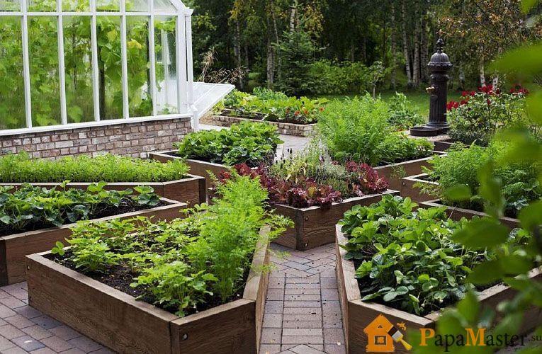 Сад и огород своими руками, цветы на даче, полезные 42