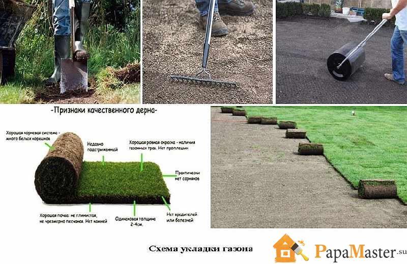 Технология выращивания рулонный газон 90