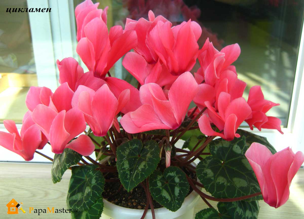 Комнатные цветы в фото уход и названия