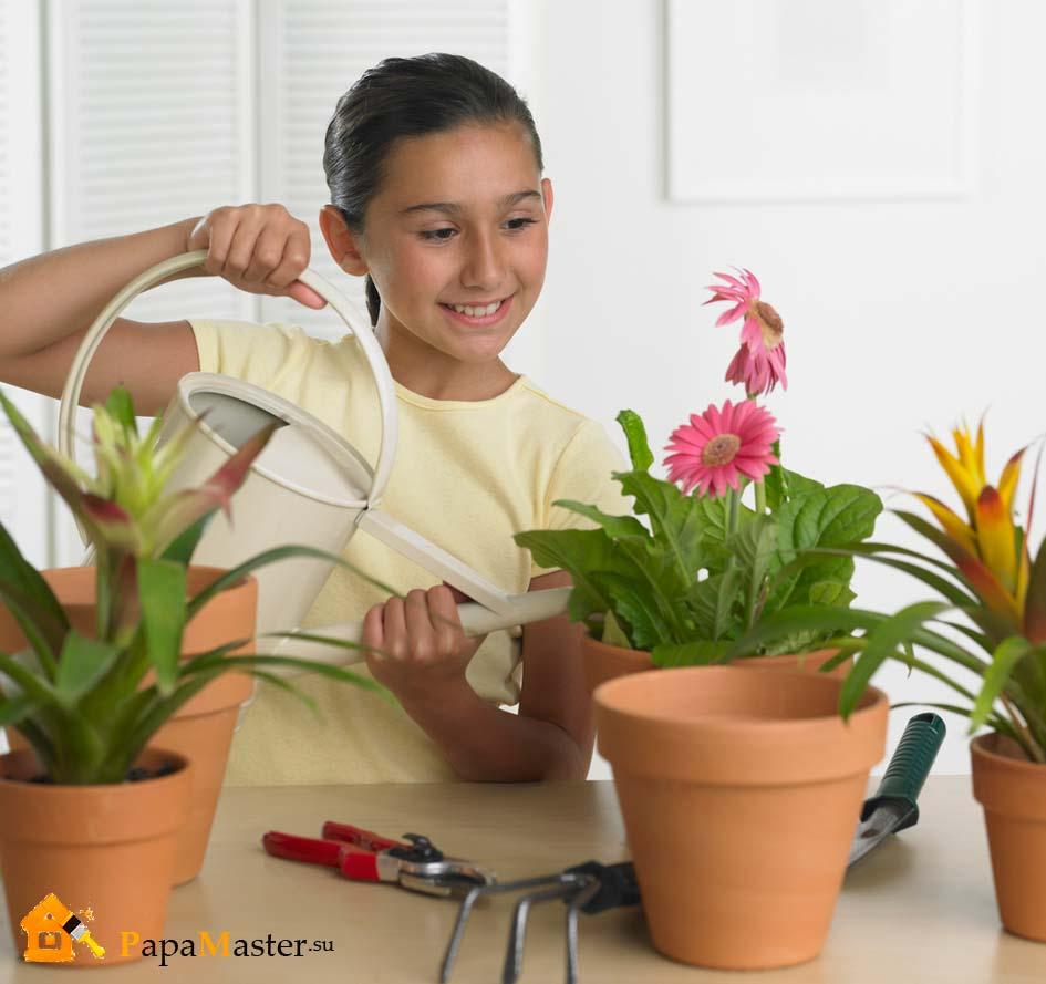Полезные цветы для детской комнаты фото