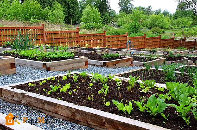 for Vegetable patch ideas