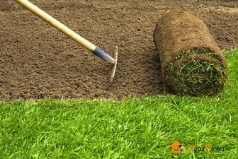как правильно сажать газонную траву