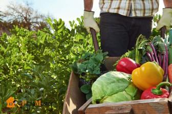 с чего начать органическое земледелие на собственных грядках