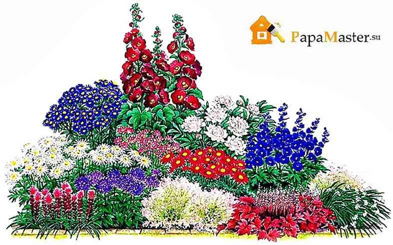 Многолетние цветы для клумб фото схемы