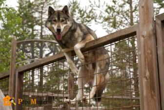 как построить вольер для собаки