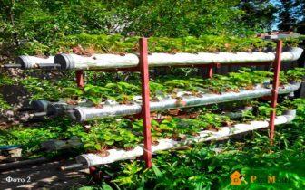 Выращивание клубники в трубах ПВХ вертикально: суть метода